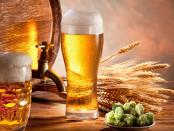A sör védi az agyat