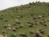 Tibet-temetkezés2