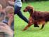 kutyakiállítás méregezés