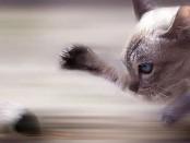 Macska egér